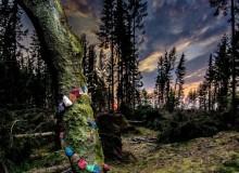 Lyne skov. (Foto: Lars Kjærgaard Jespersen)