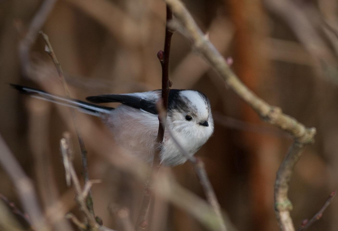 Fugle i Lyne